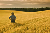 A man looks out over a maturing wheat field