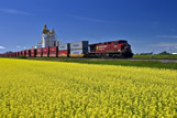 A train carrying containers passes a canola field and inland grain terminal